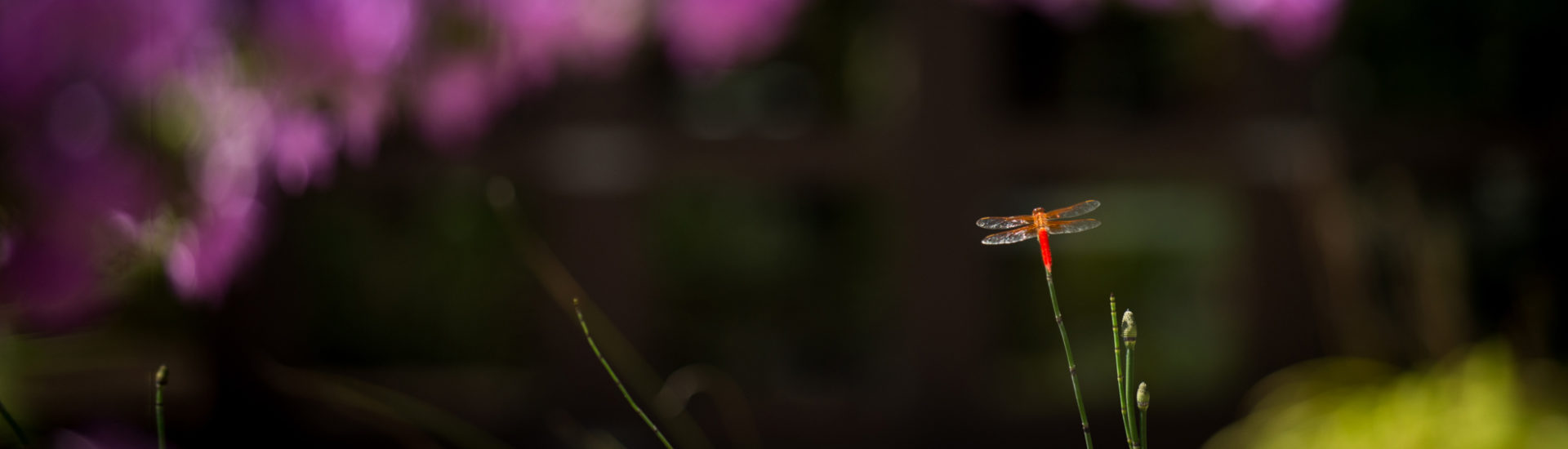 032_CCH_Garden_BrendaLaddPhoto